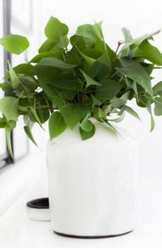 家中绿植摆放有什么讲究?